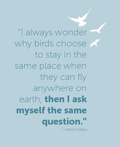"""I always wonder why birds choose to stay in the same place when they can fly anywhere on earth, then I ask myself the same question."" Harun Yahya"