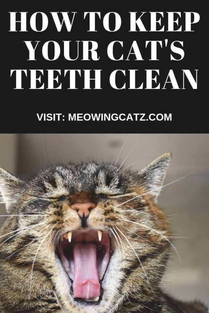 High Quality Cat Litter Delivered Directly To Your Door For Subscribers You Will Only Need To Change The Litter Once A Month Cat Litter Pretty Litter Cat Care