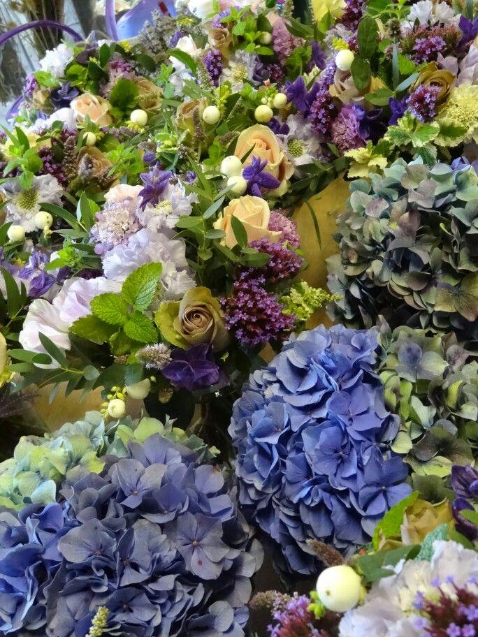 12 best September flowers images on Pinterest September flowers