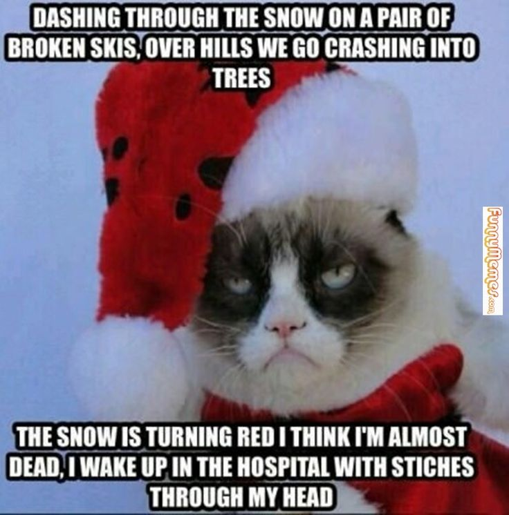 Grumpy Cat Christmas Memes Kingle Bells