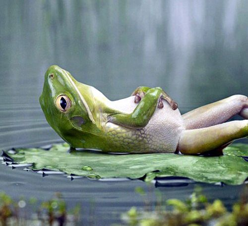 ..Ahhhh love days like this.... ribbit ribbit :)