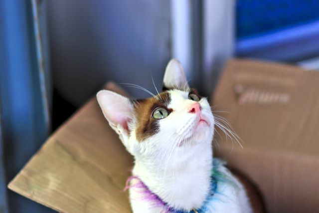 Tips For Moving A Cat Long Distance U Pack Moving Hacks Packing Cats Long Distance