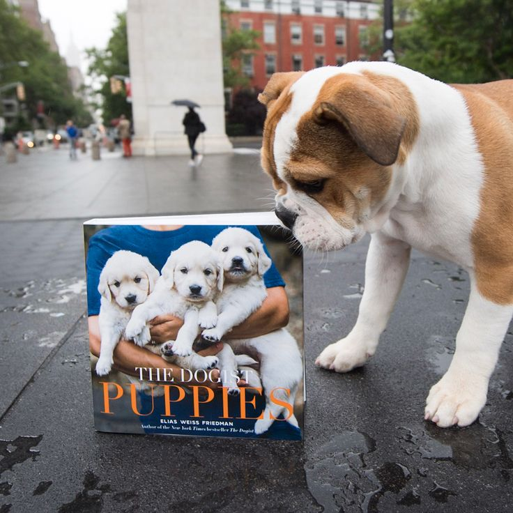 Big news! My new book, THE DOGIST PUPPIES, is available for pre-order today and will hit shelves on September 19th! Anyone who preorders will get a sweet puppy pin pack while supplies last (swipe left to see). Send your receipt from any online retailer or your local bookstore to info@thedogist.com along with your full name and mailing address. Visit thedogist.com/book to pre-order today! (Link in bio) #thedogistpuppies