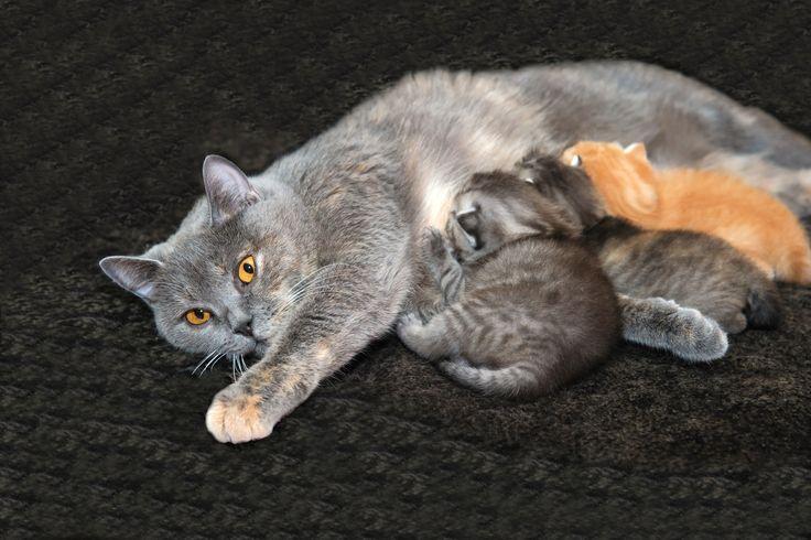 Saviez-vous que le chat est un adepte du grignotage et qu'il peut consommer jusqu'à 20 repas par jour?