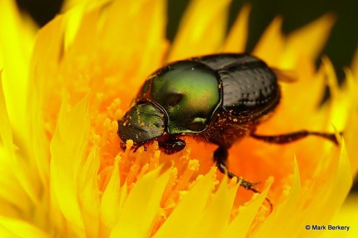 Increíbles fotografías de insectos, están preciosos!
