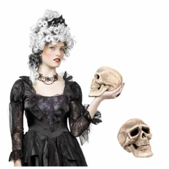 Schedel (skelet)