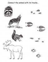 animals_tracks_matching.jpg
