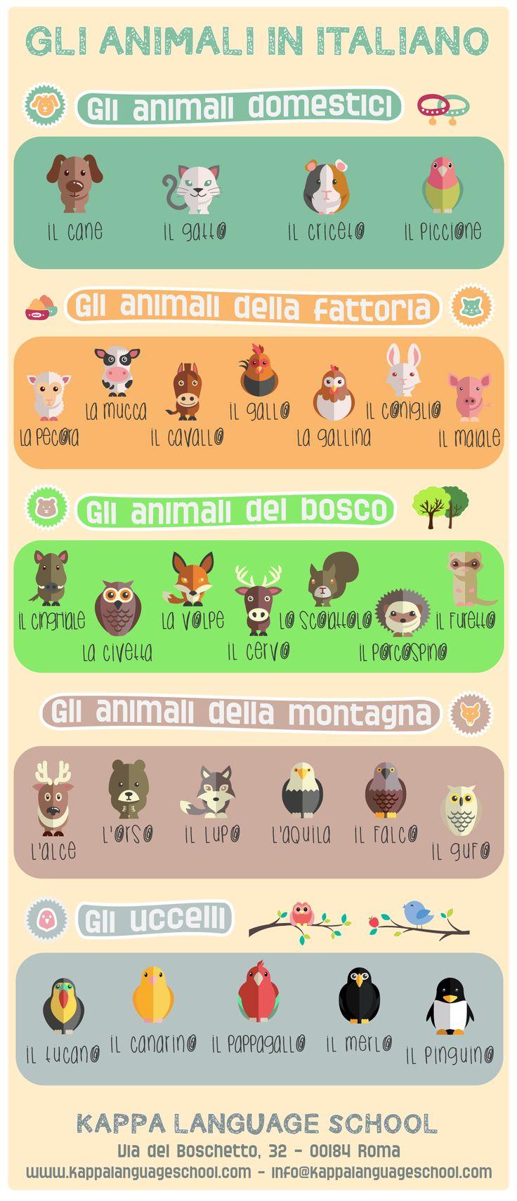 Learn Italian words: animal names, an infographic! #italianinfographic #learnitalian