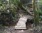 Kakamega rainforest
