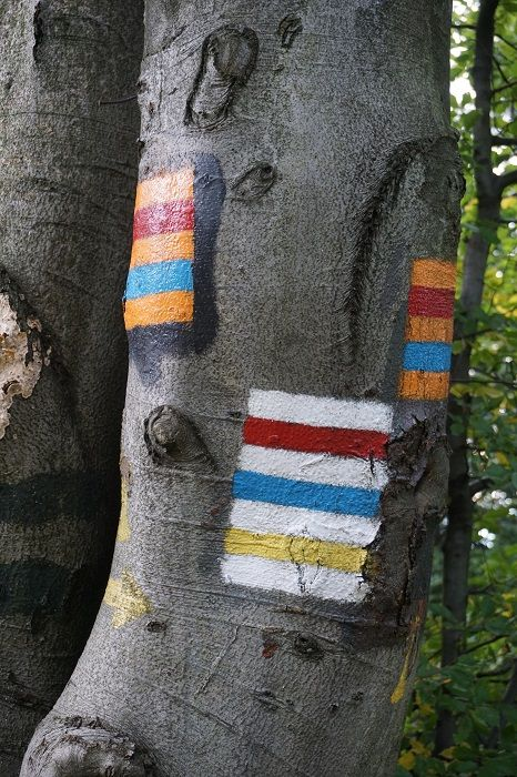 Trail signs on a tree in the Beskid Mountains, Poland