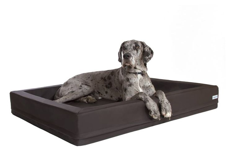 Perfect dog bed for Great Danes and other large breed dogs. Easy to clean, does not hold odor, and comes with a 5 year anti sag guarantee! http://www.doggy-beds.net/