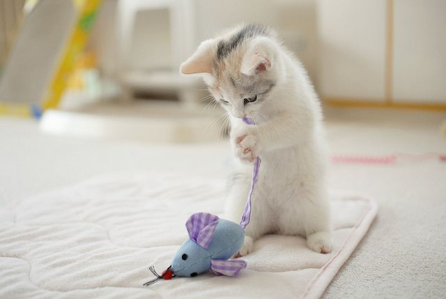 cute~: Kittens Plays, Kitty Cats, Christmas Crafts, Funnies Kitty, Pet, White Cats, Crafts Idea, Cute Kittens, Animal