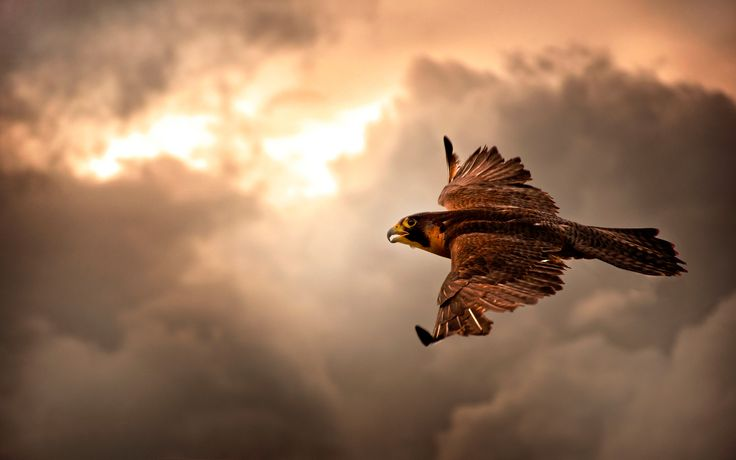 Eagle In The Clouds