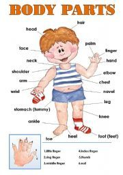 English worksheet: BODY PARTS CLASSROOM POSTER! + Through this material, student can learn vocabulary about body parts.