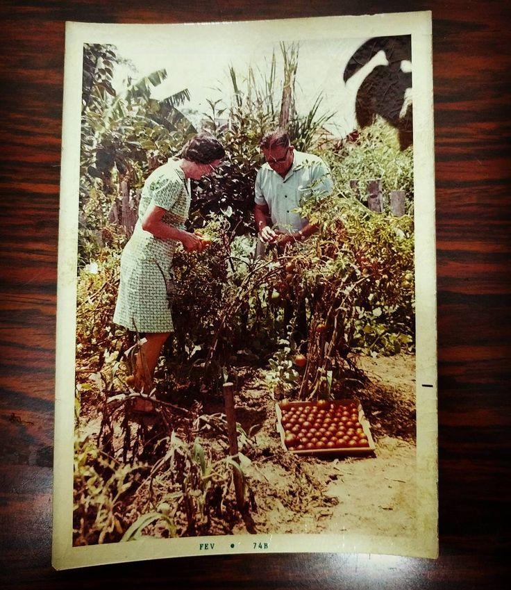 Será que um dia eu chego lá? Vô Ricardo e vó Vilja com a horta mais premiada de Canoas RS nos anos 70...