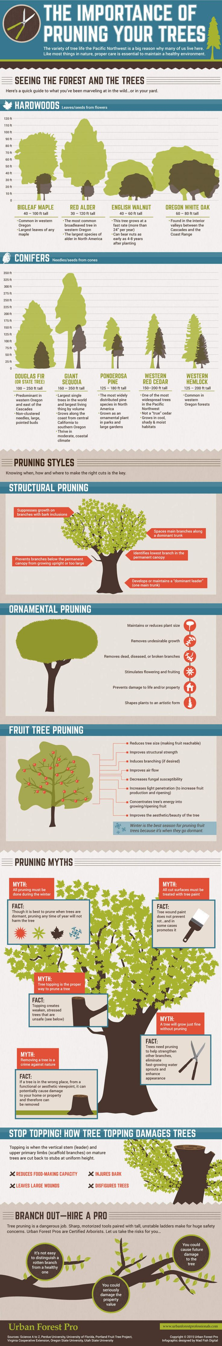The Importance of Pruning Your Trees