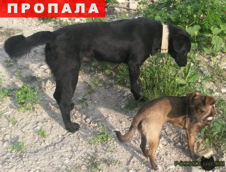 Пропала собака кобель г.Новороссийск http://poiskzoo.ru/board/read31137.html  POISKZOO.RU/31137 Пропали две собаки, черный лобрадор(мальчик) и маленькая дворовая(девочка), в районе Северной Озереевки. Просьба кто видел или нашел сообщить по телефону ...   РЕПОСТ! @POISKZOO2 #POISKZOO.RU #Пропала #собака #Пропала_собака #ПропалаСобака #Новороссийск