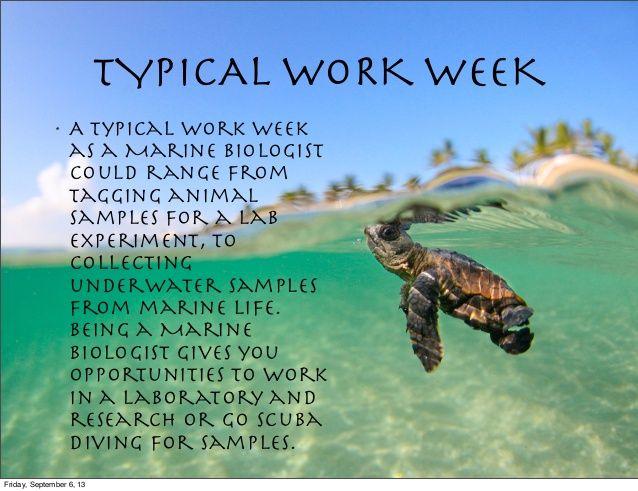 The 25+ best Marine biologist salary ideas on Pinterest Marine - marine biologist job description