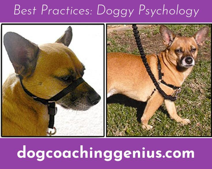 Want To Know More About Dog Aggression Training Puppy Training