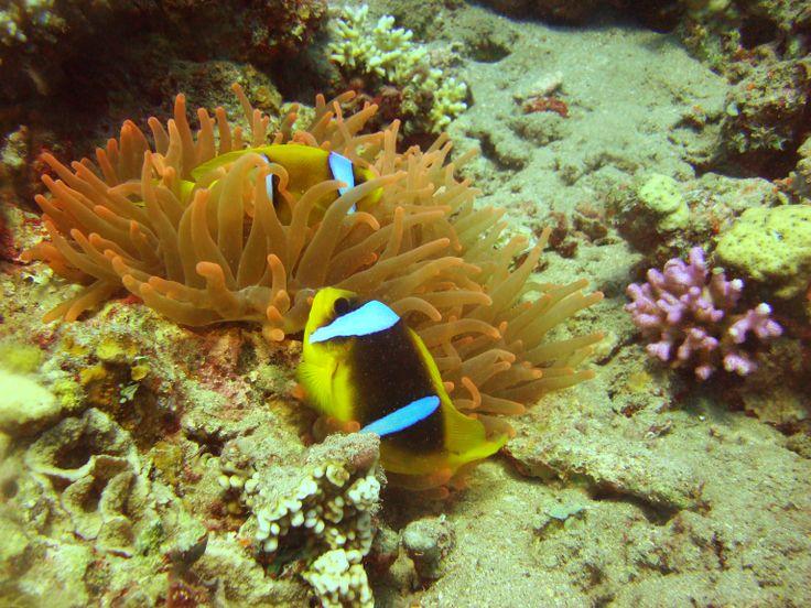 Nemo con Narcosis