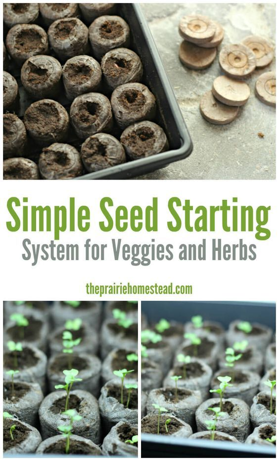 Simple Seed Starting System for Veggies and Herbs