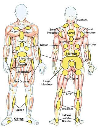 Reflexology chart (whole body)