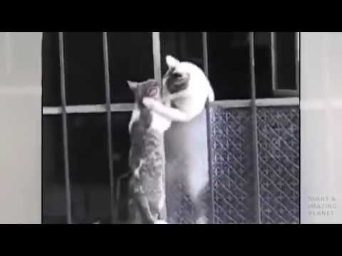 Cat Mom Helping Her son .. Touched Look !!!