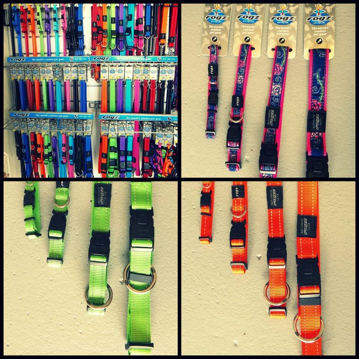 A small selection of the brightly coloured Rogz leads, collars and harnesses we have in store here at DogZone