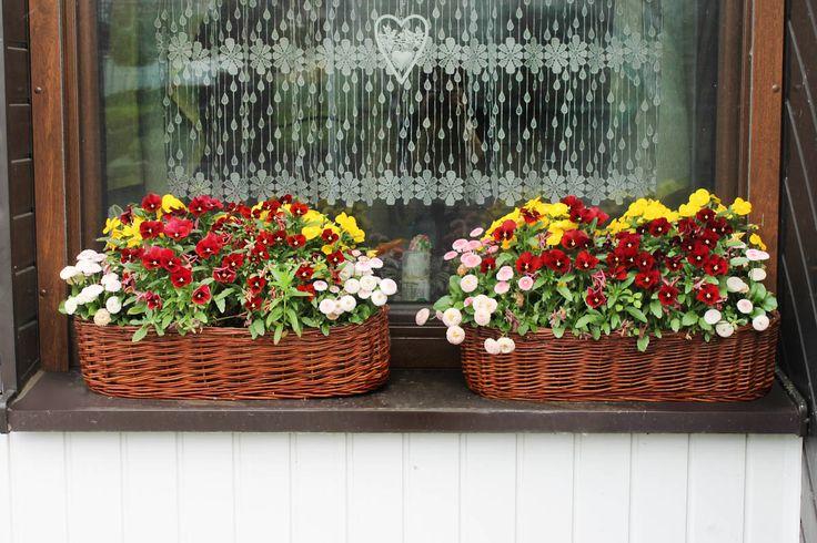 Dwie owalne wiklinowe osłony na kwiaty wyplecione z polskiej wikliny