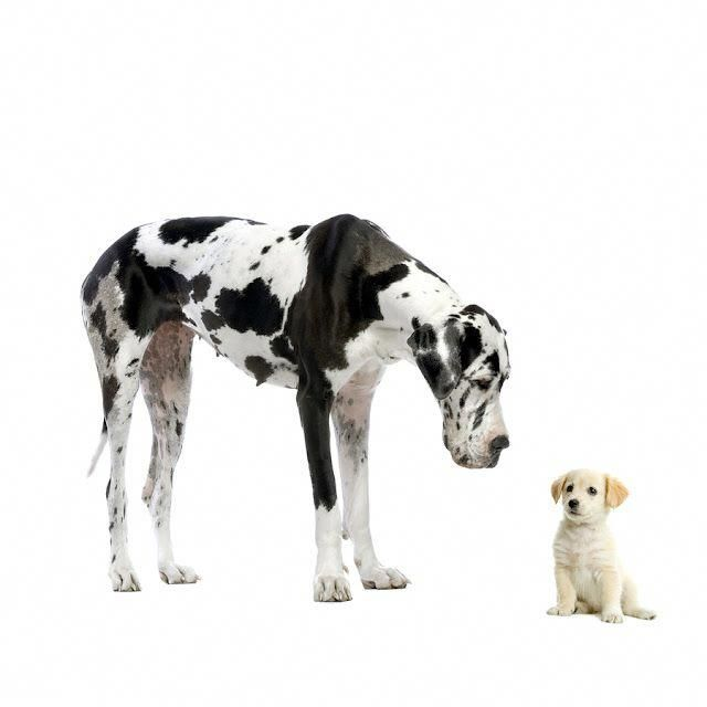 Great Dane Patient And Friendly Real Estate Postcards Little