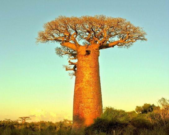 national geographic pictures of trees - Google zoeken