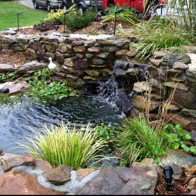 Best 25+ Coy pond ideas on Pinterest | Koi ponds, Koi pond design and Pond
