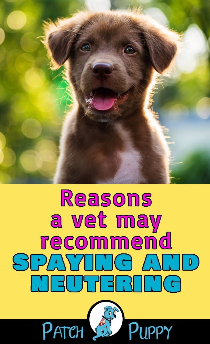 Spaying And Neutering It S Not An Easy Question To Answer Dog Facts Dog Care Dog Health