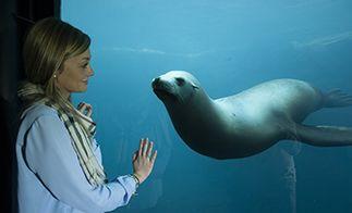 Aquarium Nausicaa, Boulogne-sur-Mer