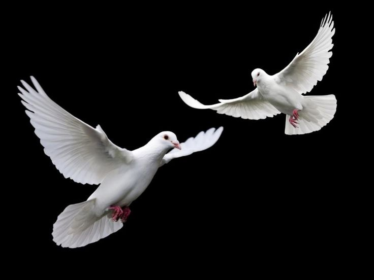 What Does 2 White Doves Symbolize The Best Dove 2017