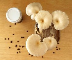 You'll love learning to grow your own Mushrooms in Coffee Grounds at home and it's easy!