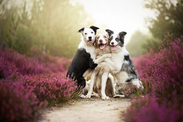 ポーランド人の写真家のアリツィアさんが撮影した犬の写真が幻想的だと思いましたので集めてみました♪犬と花をテーマにしたのでしょうか♪素敵な写真がいっぱいあります♪
