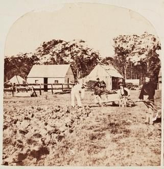 Farming at Burwood, West of Sydney in 1858-59. Photo shared by the State Library of NSW. v@e.