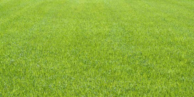 OPPNÅELIG: Det finnes faktisk flere ting du kan gjøre for å oppnå en slik fin og grønn plen.