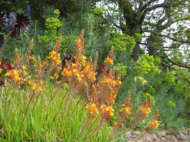 127 best Low water garden design images on Pinterest Landscaping