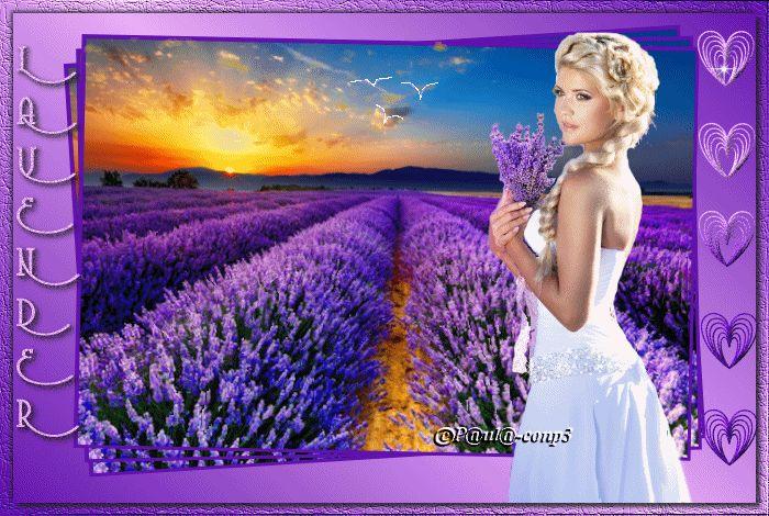 Lavender. Beautiful !