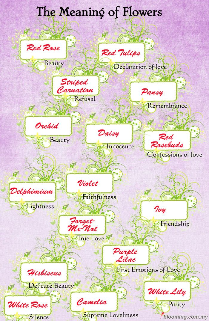 17 best images about meaning of flowers on pinterest friendship the secret and search - Flowers that mean friendship ...
