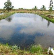 Como construir e abastecer tanques de peixes