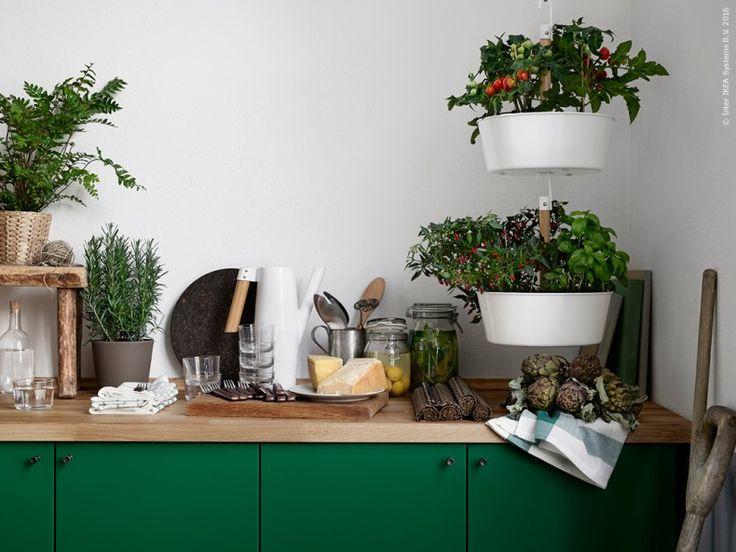 Om man låter växthuset och köket hämta inspiration av varandra så får man ett härligt grönskande kök, klorofyllt av ätbara nyttigheter och rena naturmaterial. METOD bänkskåp med FLÄDIE dörr och BITTERGURKA ampel.