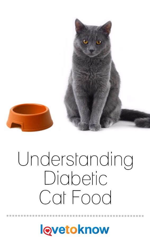 All cat foods are not created equal, but choosing a diabetic cat food that works well for your cat can play an important role in controlling his diabetes. #cat #cats | Understanding Diabetic Cat Food from #LoveToKnow