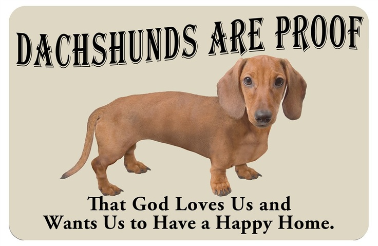 Yep. Love my Dachsund!