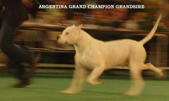 Pin By Dog Love On Dogo Argentino Puppies For Sale Dogo