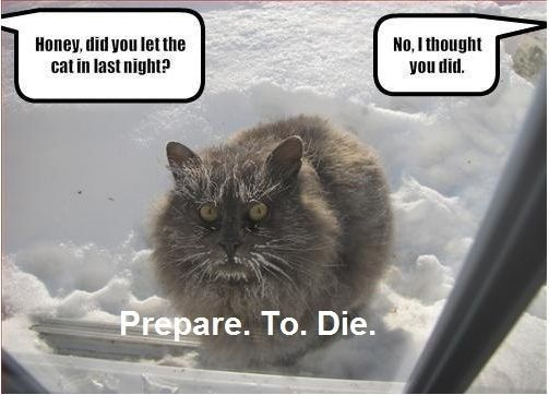 Prepare. To. Die.Photos Gallery, Funny Captions, The Face, Funny Pictures, Funny Cat, Funny Animal Photos, So Funny, Kitty, Cat Memes