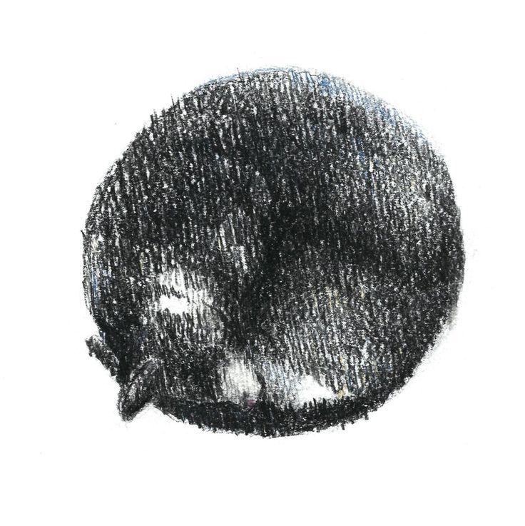 black cat, sleep, сolour pencils, graphic, illustration, draw черная, кошка, кошка спит клубочком, графика, иллюстрация, цветные карандаши.