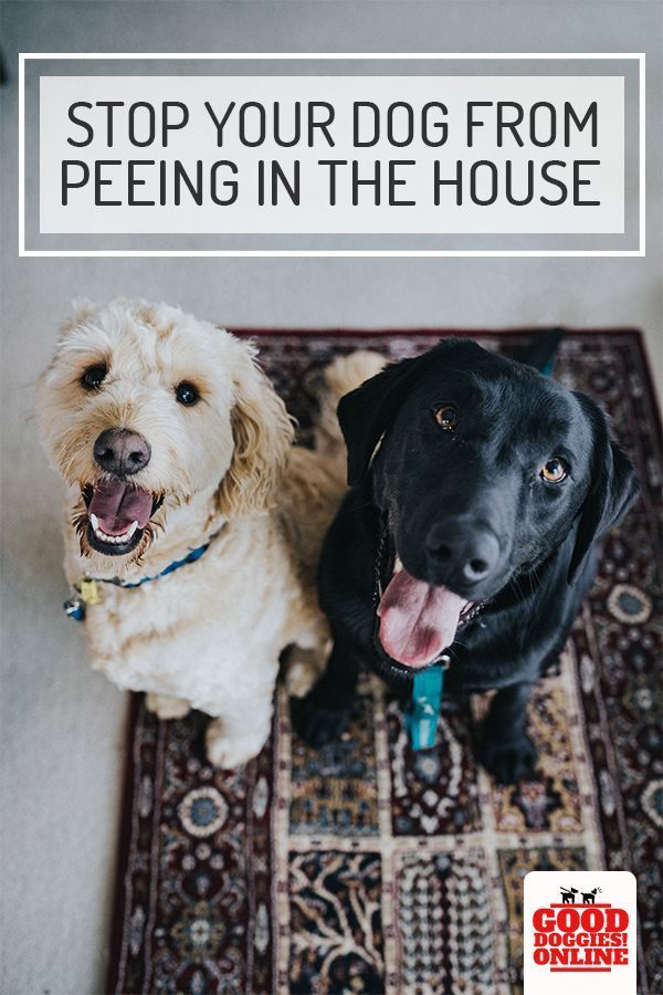 How To Stop A Dog From Peeing And Pooping In The House Dog